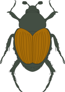 Green And Brown Beetle Clip Art At Clker