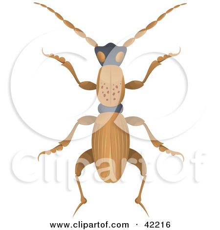 Clipart Illustration of a Long Brown Beetle With Spots On Its Back.