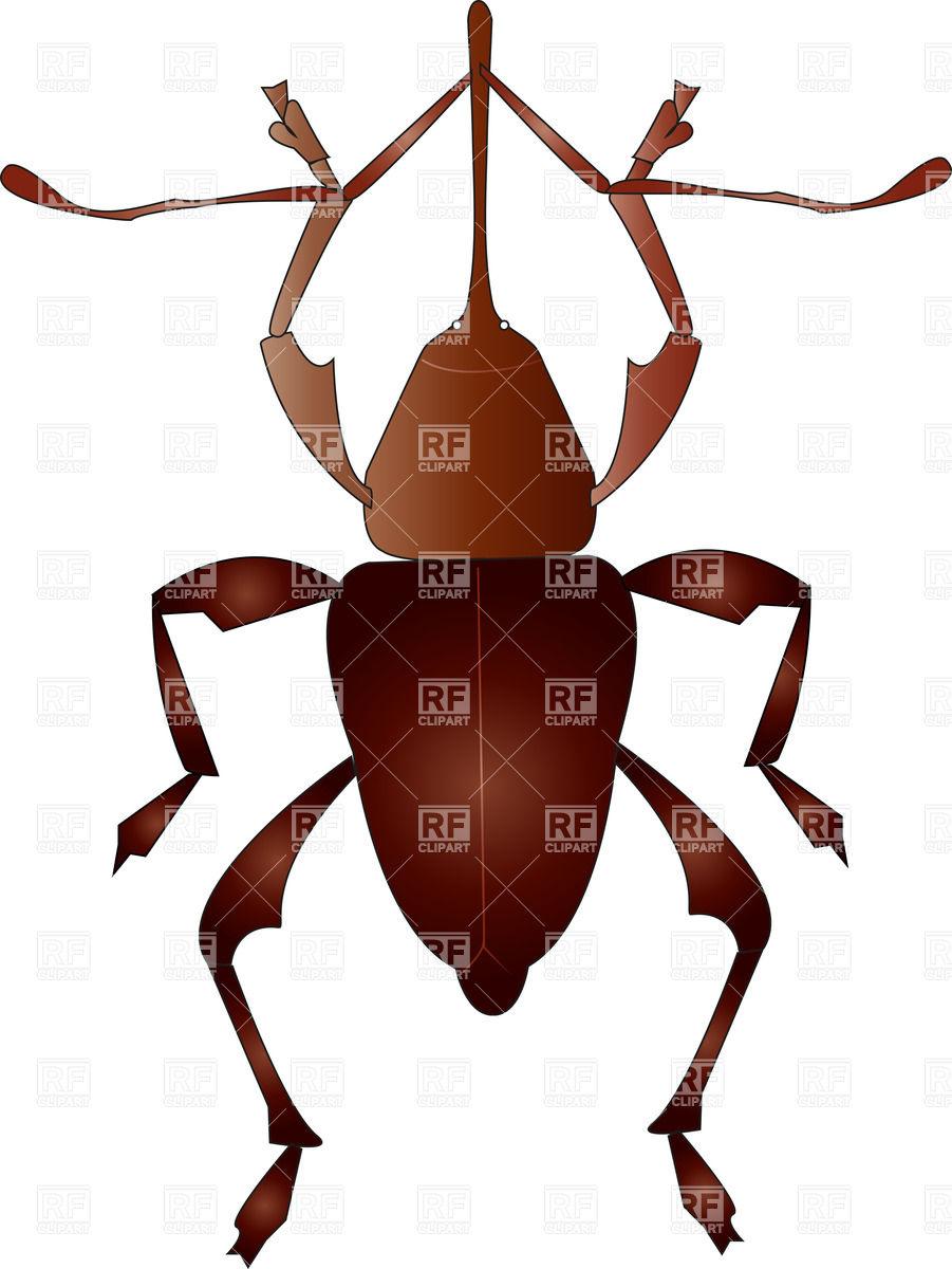 Brown snout beetle Vector Image #20375.