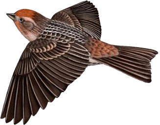 Brown_Bird_Free_Clipart.png?m=1367359200.