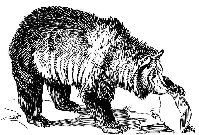 Free Kodiak Bear Clipart, 1 page of Public Domain Clip Art.