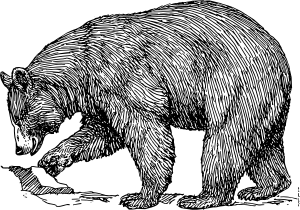 Brown bear clipart black and white.