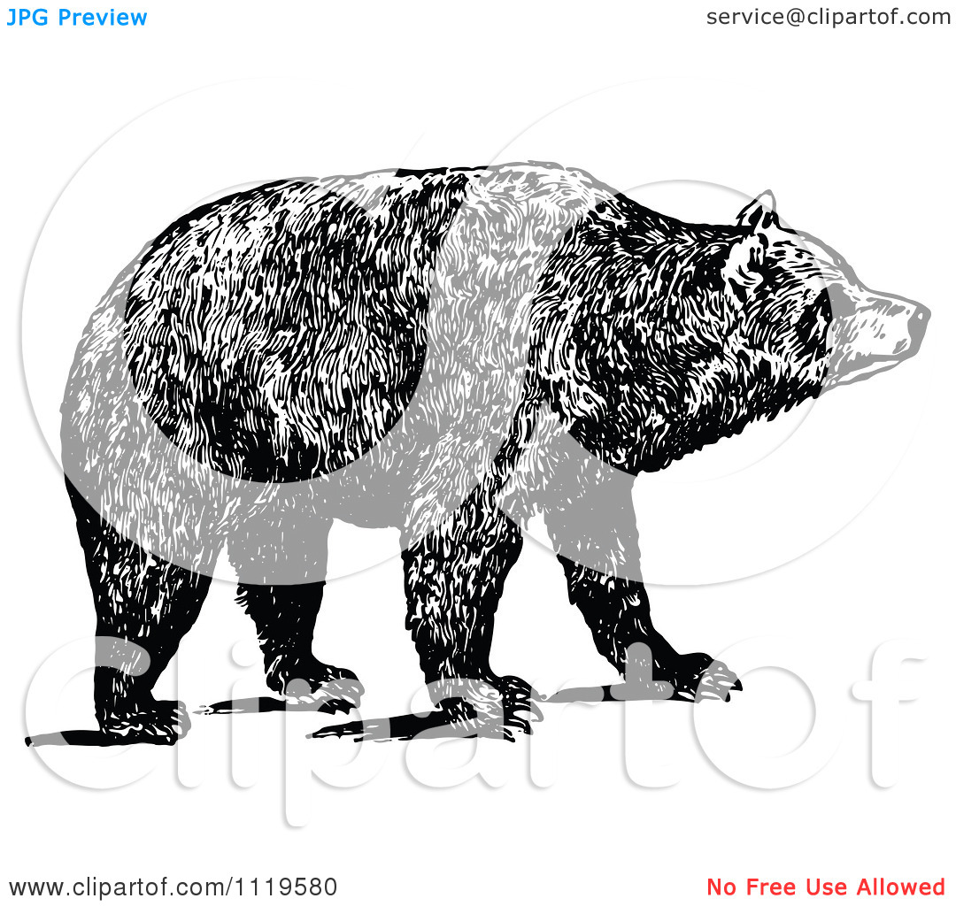Clipart Of A Retro Vintage Black And White Brown Bear.