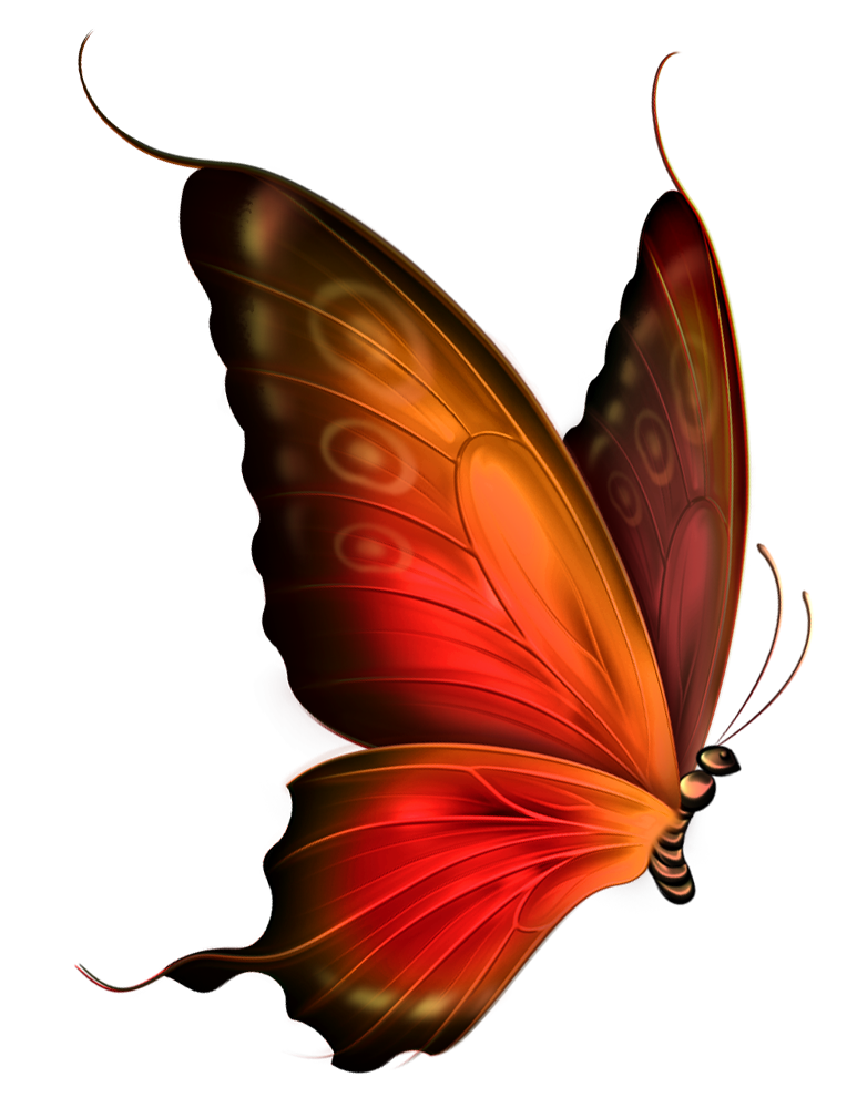 butterfly clipart transparent background