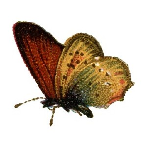 Antique Clipart: Yellow and Brown Butterfly..