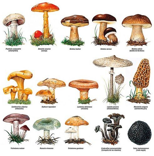 1000+ ideas about Cepes Non Comestibles on Pinterest.