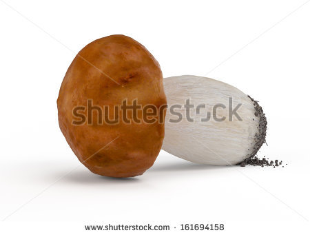 Chestnut boletus Stock Photos, Images, & Pictures.