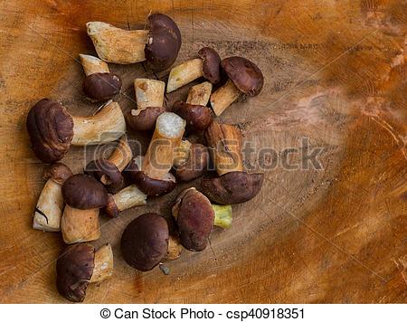 Stock Images of fresh woodland fungi with boletus mushrooms on.
