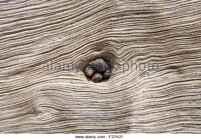 Tropical Snails Stock Photos & Tropical Snails Stock Images.