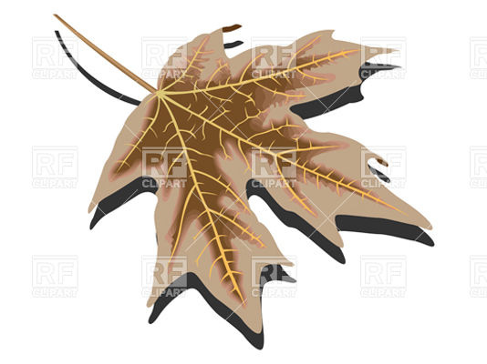 Dry brown autumn leaf Vector Image #10734.
