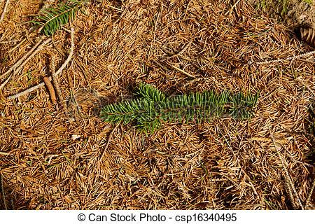 Stock Photographs of pine needles background.
