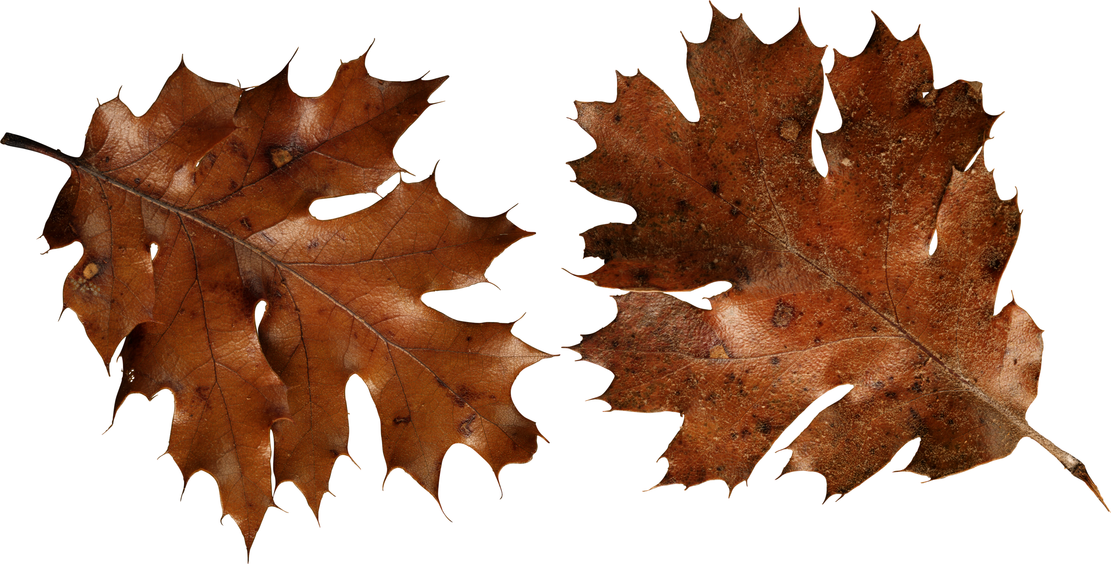 Brown leaf and grass clipart png.