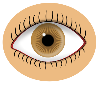 Free Eye Clipart, 3 pages of Public Domain Clip Art.