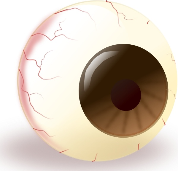 Ecuabron Brown Eye clip art Free vector in Open office drawing svg.