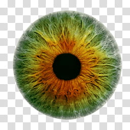 Iris , green and brown contact lens transparent background.