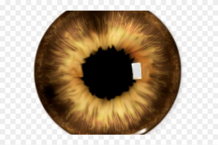 Brown Eyes Clipart Yellow Eye.