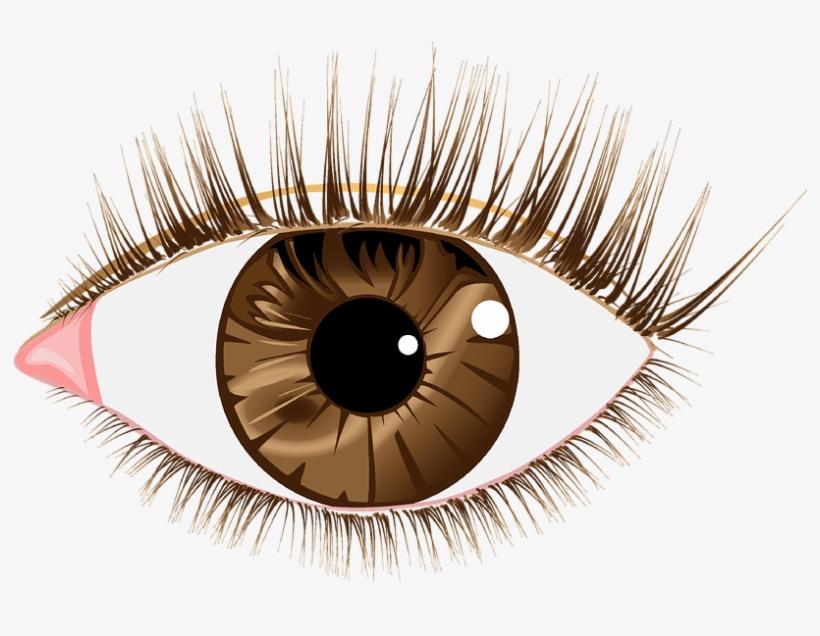 Eye Lashes Images.