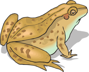 Brown Frog Clipart.