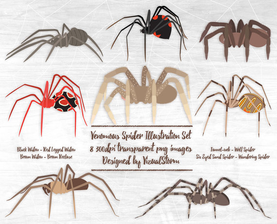 Venomous Spiders Clipart Arachnid Clipart For by VizualStorm.