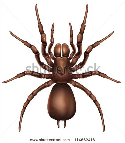 Funnel Web Spider Stock Images, Royalty.