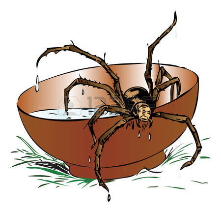 606 Brown Spider Stock Vector Illustration And Royalty Free Brown.