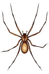 1000+ images about Spiders on Pinterest.