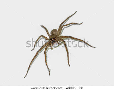 Spider Bite Stock Images, Royalty.