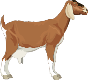 Female Goat Clipart.