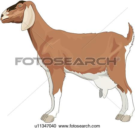Clipart of Milk Goat u11347040.
