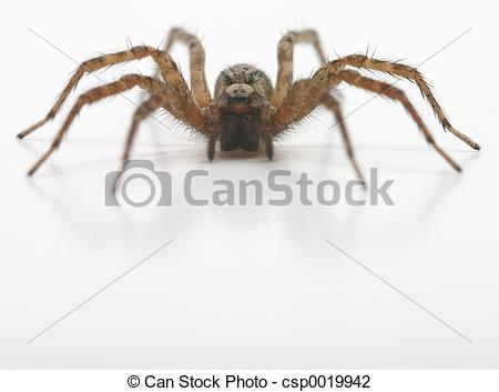 Stock Photo of Brown hairy spider.