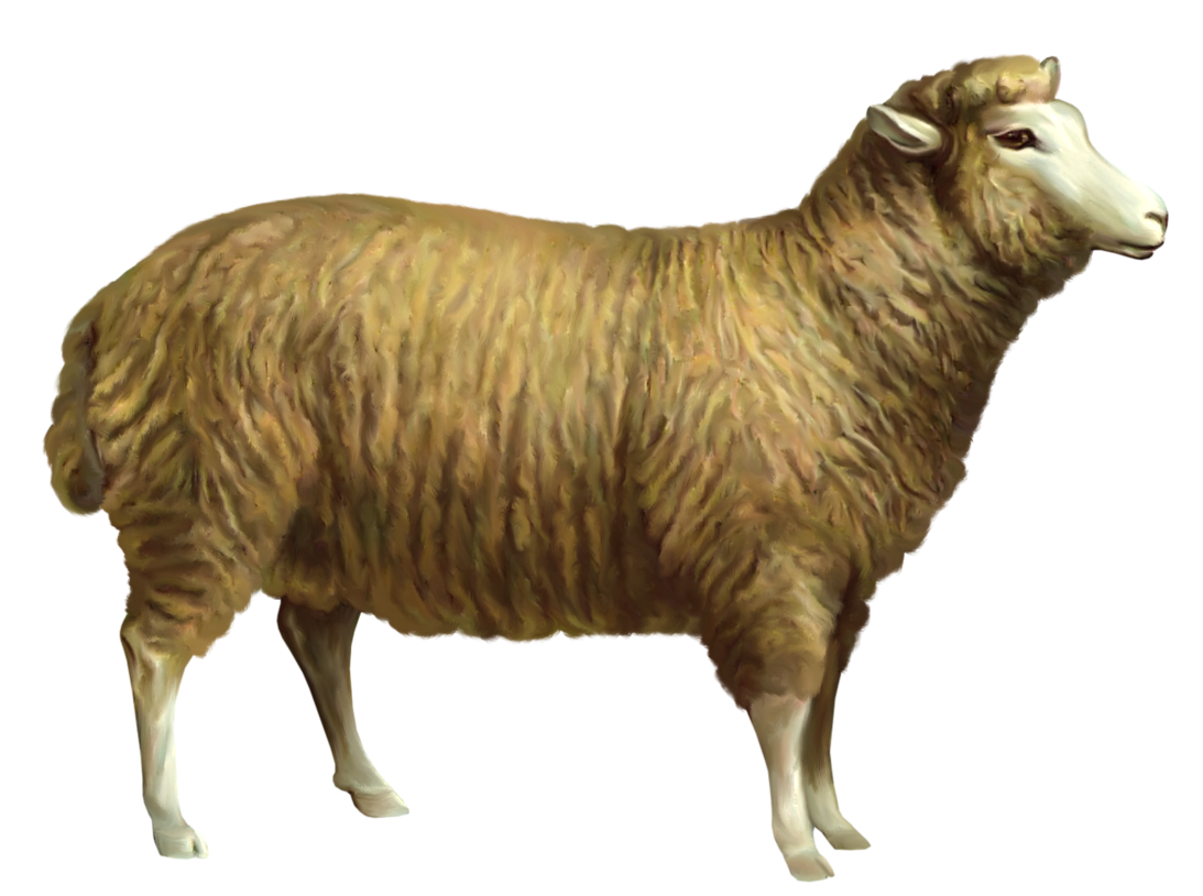 Sheep clipart png.