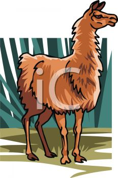 Picture of a Brown Llama Standing In a Vector Clip Art.