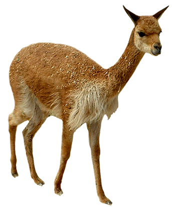 Llama clip art cartoon free clipart images.