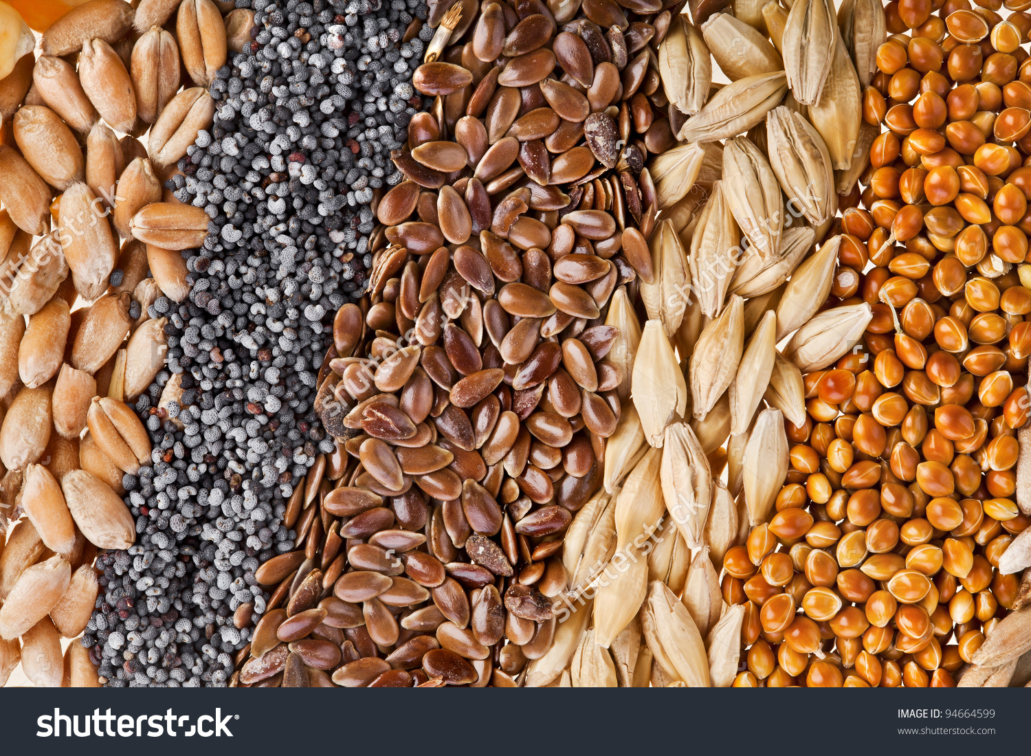 Cereal Grains Seeds Rye Wheat Barley Stock Photo 94664599.
