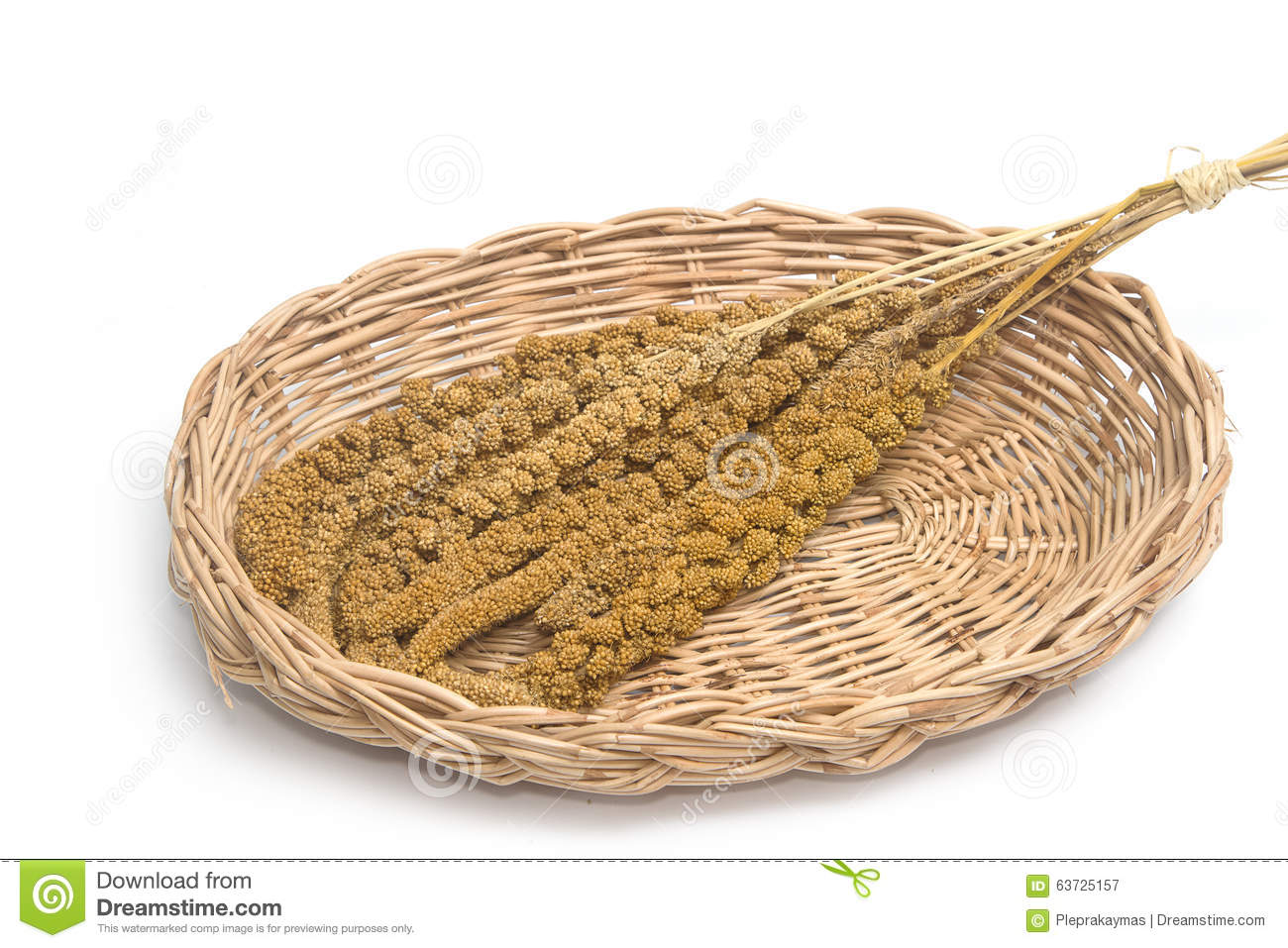 Mature Millet Stock Photo.