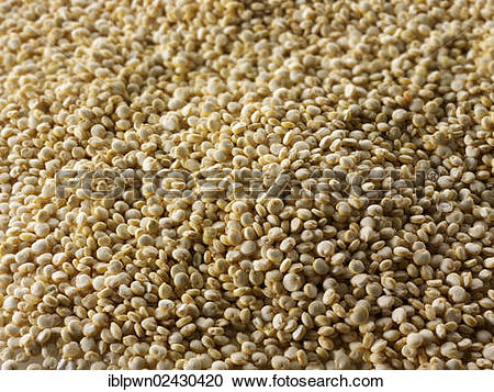 "Stock Photography of ""Quinoa, Inca rice or millet Andes."