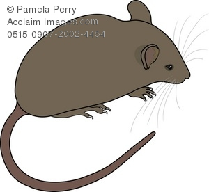 brown mouse clipart & stock photography.