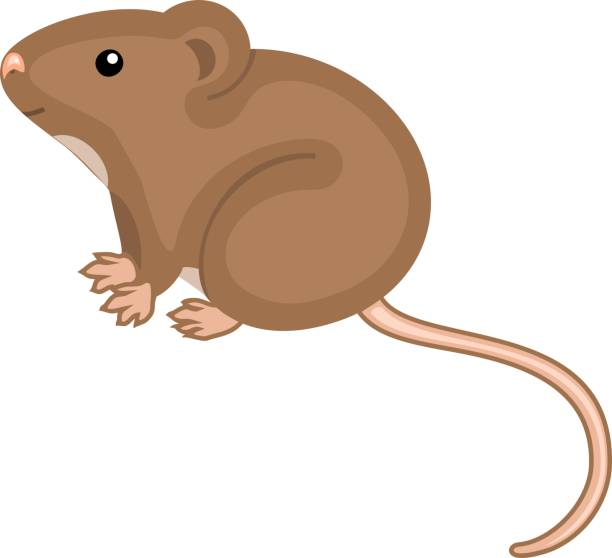 Best Field Mouse Illustrations, Royalty.