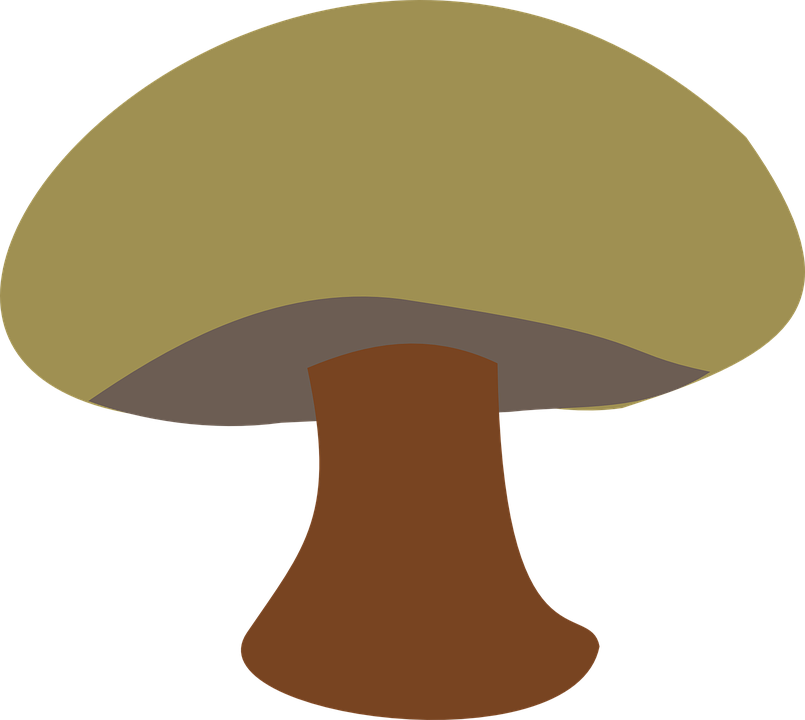 Free vector graphic: Mushroom, Brown, Little, Grass.