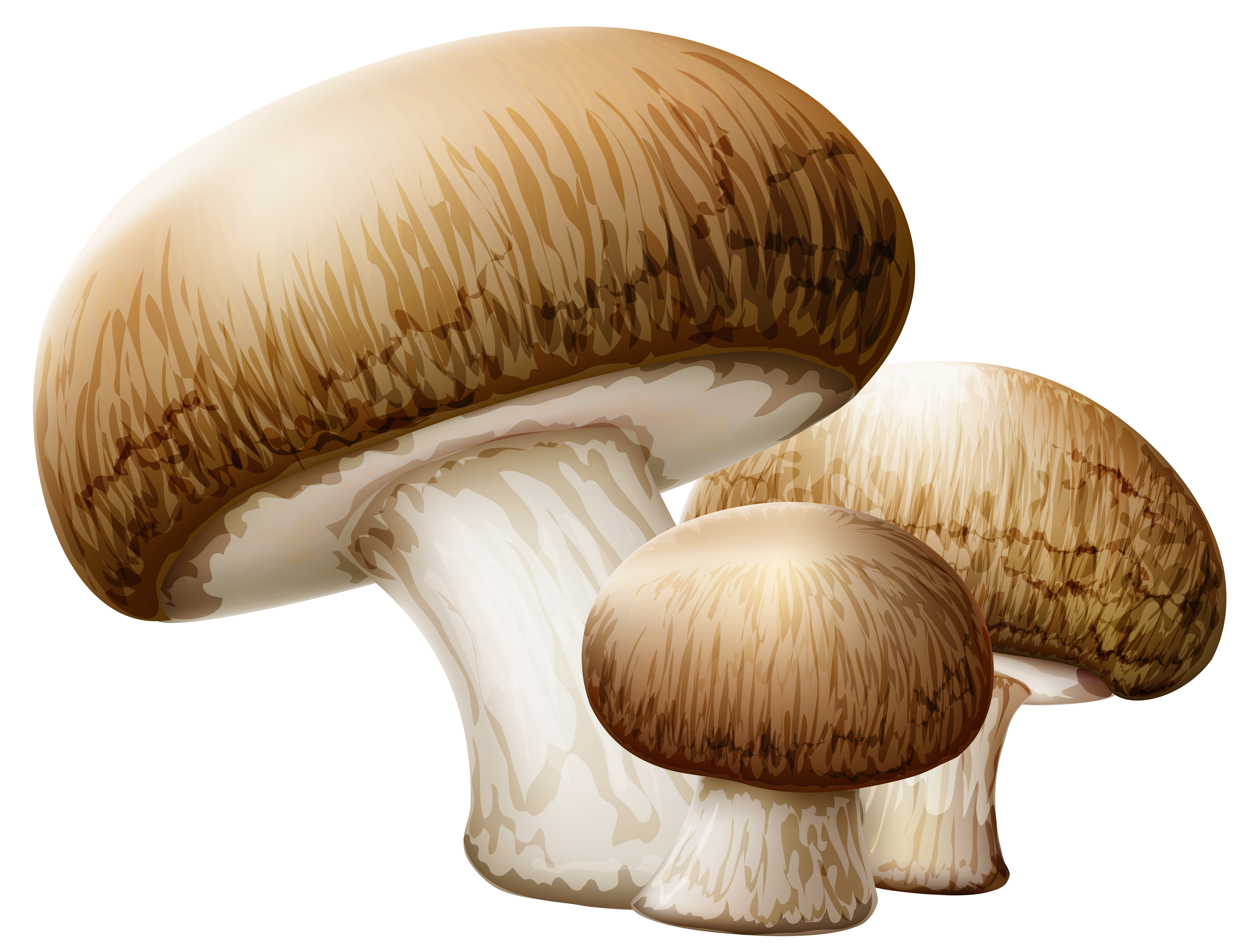 Mushroom clipart png.