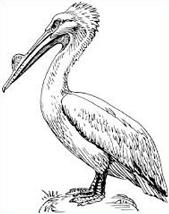Free Brown Pelican Clipart.