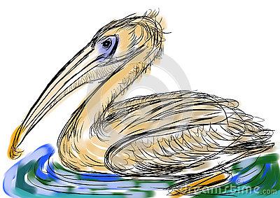 Hand Draw Bird Pelecanidae Stock Illustration.