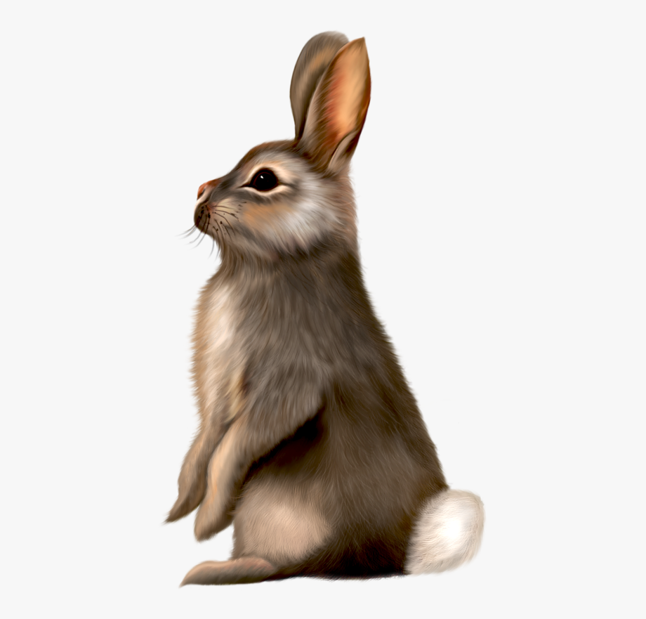 Painted Brown Bunny Clipart.