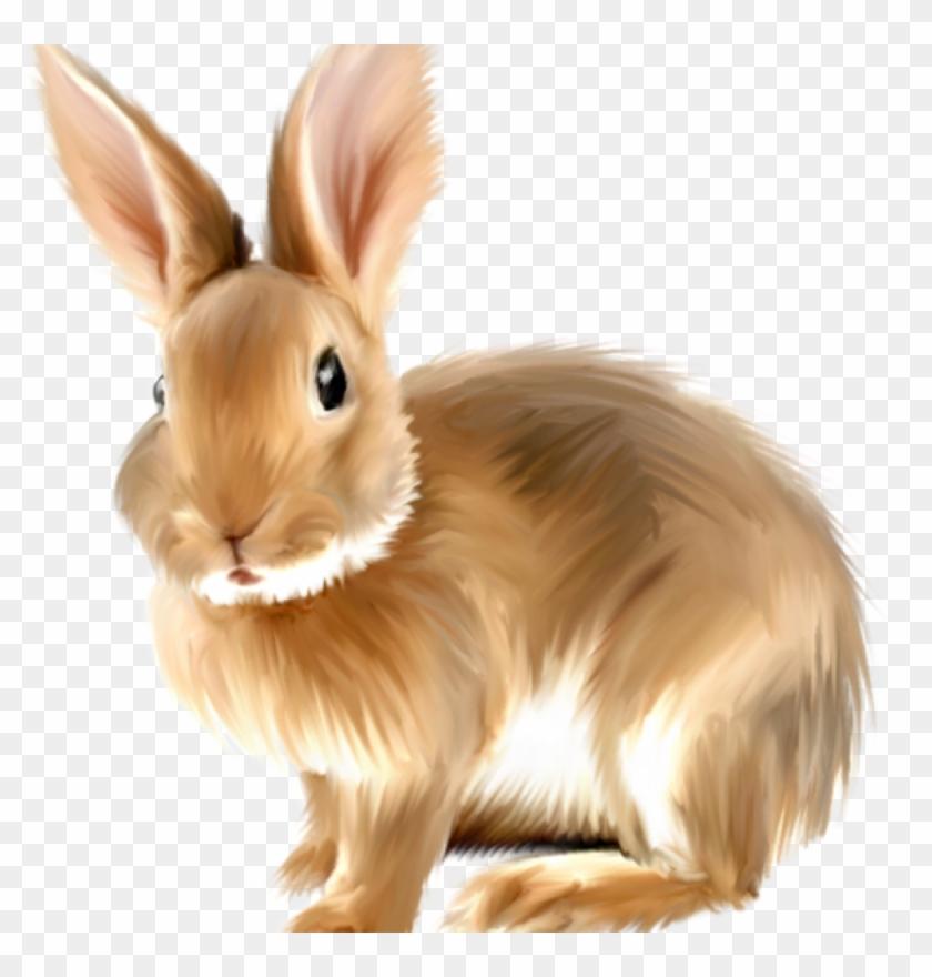 Rabbit Clipart Free Free Png Rabbits Bunnies Transparent.