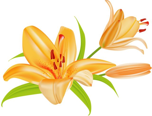 1000+ ideas about Tiger Lily Flowers on Pinterest.