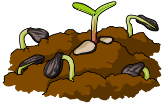 Seed Clipart.