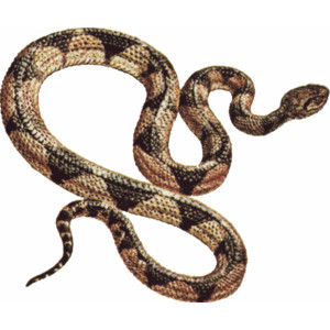 Green and brown snake clipart free design download.
