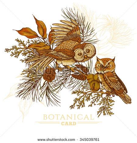 Spruce Owl Stock Photos, Royalty.