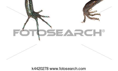 Lizard claw print clipart.