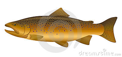 Brown Trout Clipart #1.